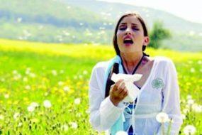 Масло черного тмина в лечении аллергии